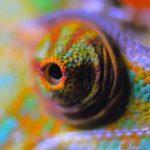 Inkubator Reptilien – Bruterfolge steigern