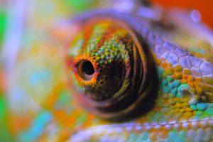 Inkubator Reptilien Chameleon Auge