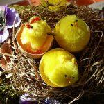 Hühnereier ausbrüten – So wird es gemacht