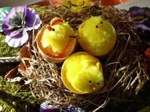 Hühnereier ausbrüten Hühnerküken im Nest