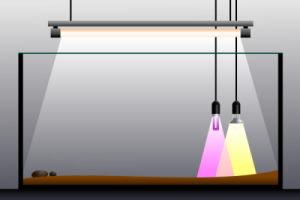 Terrarium Beleuchtung