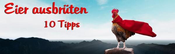 Eier ausbrüten 10 Tipps